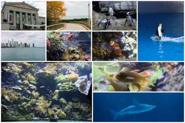 chicago_shedd-aquarium